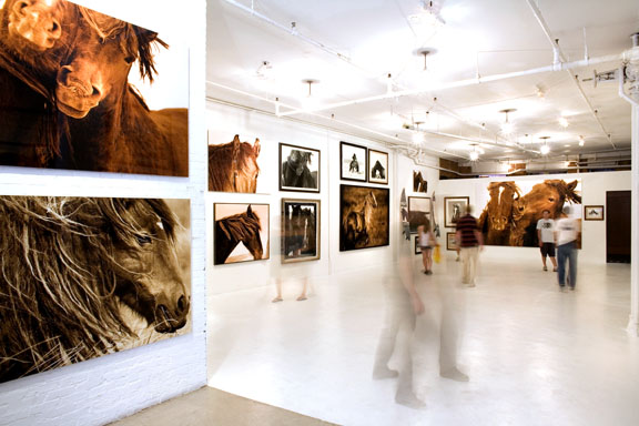 Wild Horses of Sable Island show by Roberto Dutesco