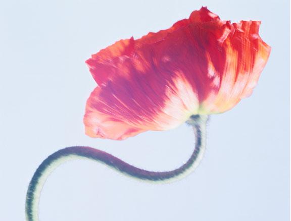 Flower photograph by Roberto Dutesco
